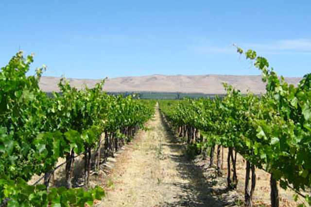 A scenic photograph of the Dionysus-Weinbau Vineyards