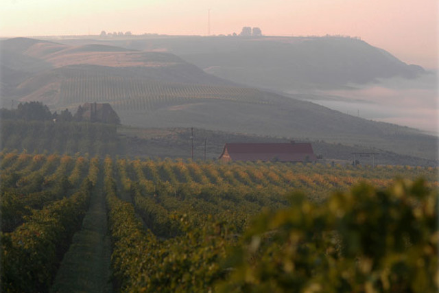 A scenic photograph of the Sagemoor Vineyards